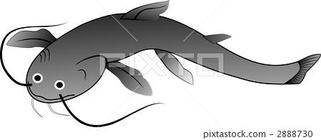 鲶鱼 淡水鱼 一只动物