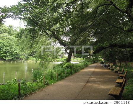 善福寺公园 人行道 池塘