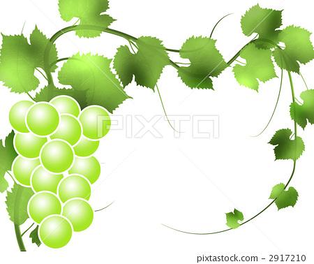 插图素材: 葡萄藤 水果 数字动画