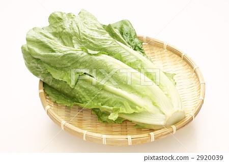 图库照片: 生菜 叶菜类 绿叶菜图片