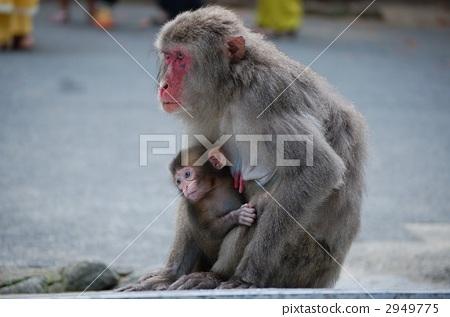 婴儿 动物宝宝 宝宝