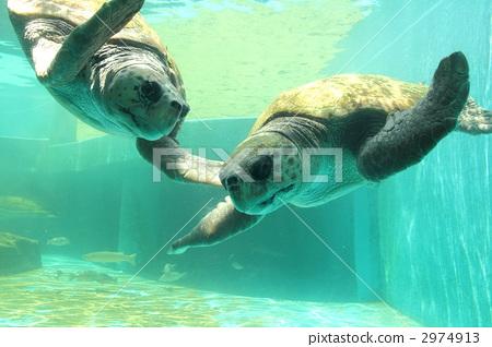 海洋动物名称