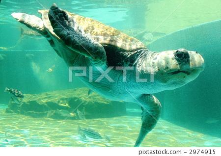 深海动物 concept