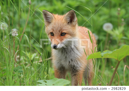 动物 一只动物-图库照片