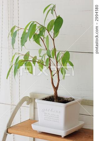 图库照片: 室内盆栽 观叶植物 杂物