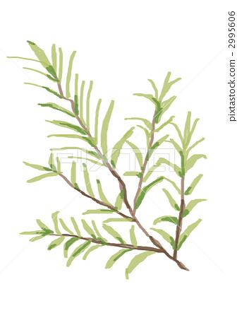 插图素材: 绿叶 植物 植物学