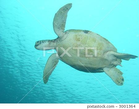 海龟 海洋动物 海