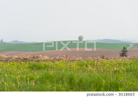 田地 农村场景 原野
