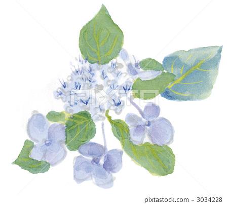 首页 插图 植物/花 绣球花 绣球花 手绘 动画的  *pixta限定素材仅在p