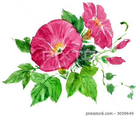 插图素材: 牵牛花 花朵 花