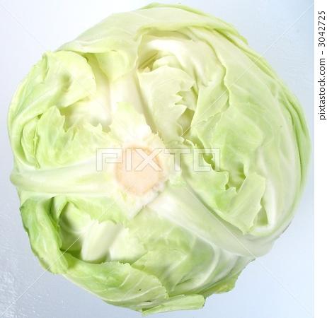 包菜 甘蓝 蔬菜