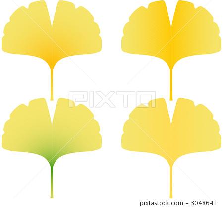 银杏叶 银杏树 落叶