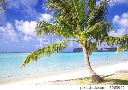 椰子树 沙滩 海洋