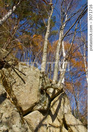 照片素材(图片): 灌木丛 草丛 阔叶树