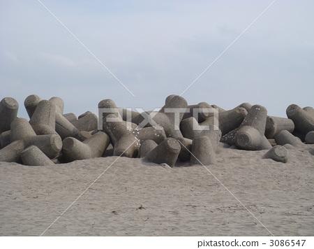 四足动物 海滩 沙滩