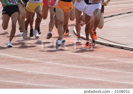 长跑最厉害的动物