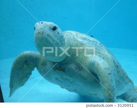 海龟 乌龟 海洋动物