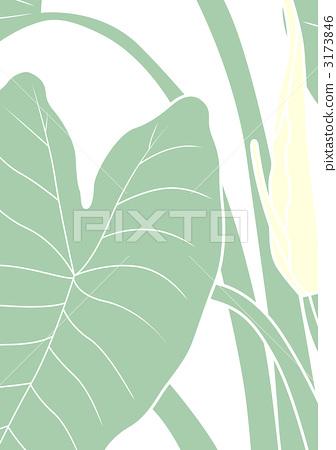 绘图双子叶植物根的初生结构