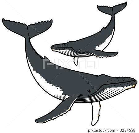 海洋动物 座头鲸 鲸鱼