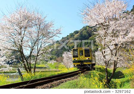 照片: 樱花 樱桃树 火车