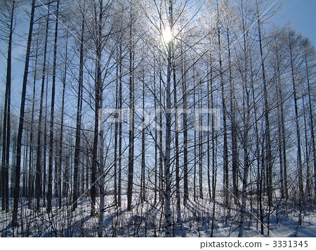 雾凇 雪景 防风林