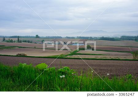 田地 原野 农村场景