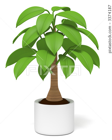 室内盆栽 观叶植物 花盆