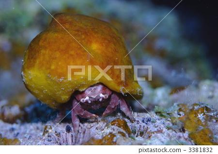 图库照片: 海洋动物 热带海洋 海绵