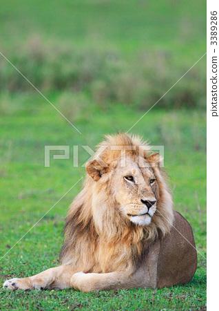 动物学 stock photos