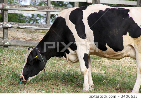 动物 牧场 黑白