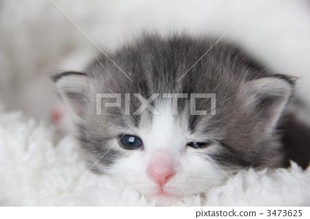 猫眨眼睛 动态表情_猫眨眼睛