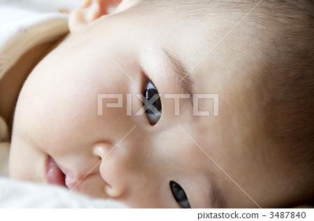 美颜 面部的 动物宝宝