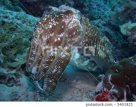 壁纸 动物 海底 海底世界 海洋馆 水族馆 鱼 鱼类 450_355