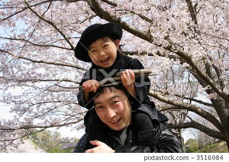 父母和小孩 樱桃树 樱花