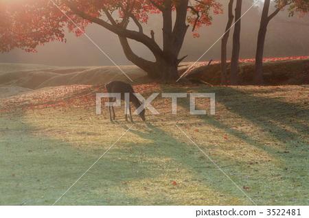 秋天 动物 世界遗产