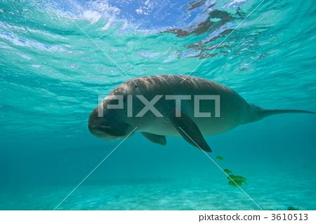 海洋动物 海洋生物