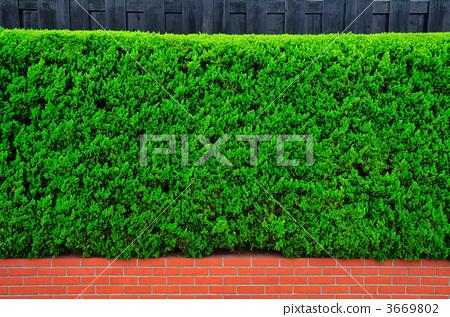 栅栏 树篱 木篱笆