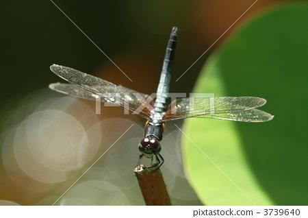 动物 昆虫 一只小动物
