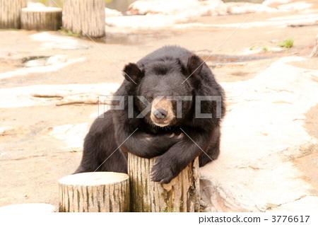 图库照片: 熊 动物 正面