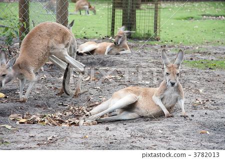 动物 可分解四肢
