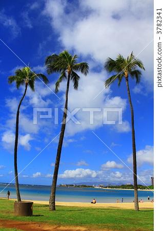 椰子树 海 大海