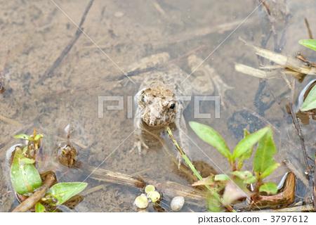 图库照片: 青蛙 粘土 土