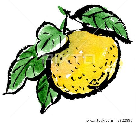 把柚子称作文旦_第5页_乐乐简笔画