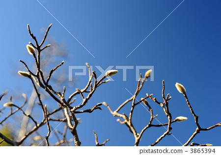 分支 发芽 树枝