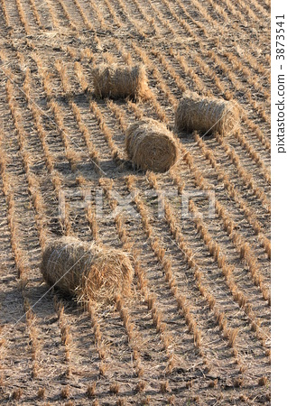 照片: 干草捆 稻草 动物饲料