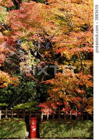 壁纸 枫叶 风景 红枫 树 319_450 竖版 竖屏 手机
