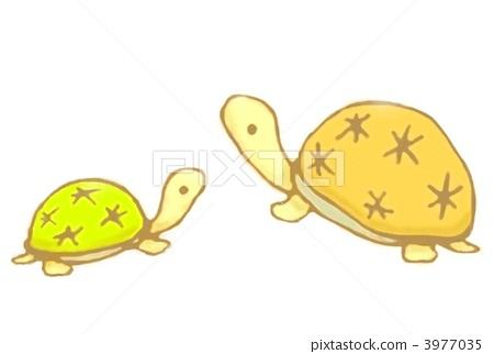 乌龟 父母和小孩 描述