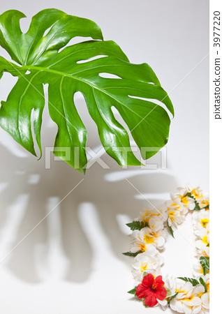 热带景象 树叶 银杏叶