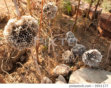 图库照片: 蜂窝 蜂房 褐色