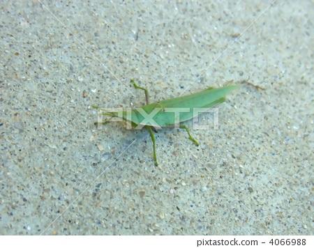 漏洞 节肢动物 昆虫
